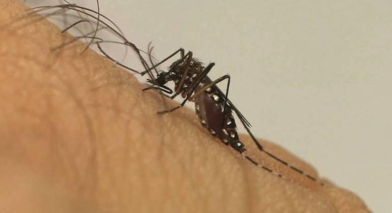 Brasil contabilizou 120,5 mil casos de dengue até 20 de março, uma queda de 73,8%