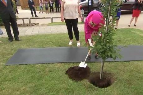 Rainha Elizabeth II plantou um pé de carpino