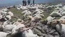 Centenas de ovelhas surgem mortas em colina após relâmpago