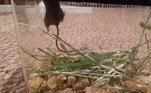 O roedor foi devolvido à natureza e o dono das plantas espera reencontrá-lo um dia. De preferência, sóbrioJá outro ratinho não teve a mesma sorte: após invadir uma hamburgueria, ele acabou mergulhando no óleo quente... Veja a seguir!