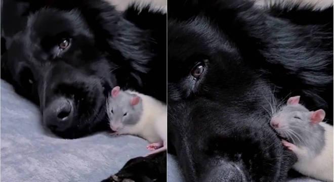 Dormir juntos se tornou o momento favorito dos novos amigos