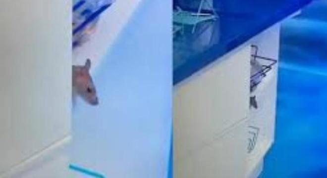 O rato Genílson circulando entre as louças do 'BBB'
