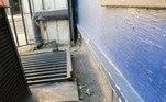 O imenso roedor foi fotografado já morto em um beco no norte de Londres. Repare também na imensa cauda do animal