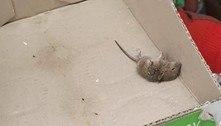 Repositor de supermercado expõe rato morto em caixa de maionese