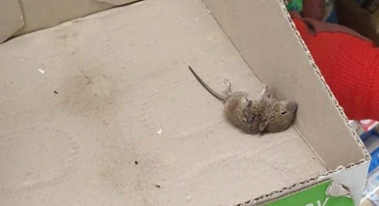 Repositor alega ter achado rato morto em caixa usada para expor maionese em prateleira