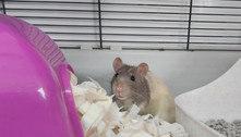 Rato ousado invade área de gato de estimação e acaba resgatado