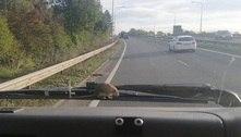 Motorista fica chocada ao ver rato pegando carona em para-brisa
