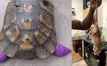 Um novo tipo de predador ameaça animais de estimação no Reino Unido, principalmente tartarugas: gangues de ratos famintos. O problema atingiu tal gravidade que uma talInternational Tortoise Association (Associação Internacional de Tartarugas) resolveu se pronunciar
