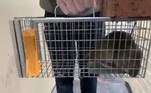 'Nossa equipe de controle de pragas retomou recentemente o monitoramento do sistema de esgoto, o que ajudará a reduzir a população de roedores', declarou um porta-voz da organizaçãoAinda na Inglaterra, uma mulher afirma ter achado um rato morto no prato descongelado que havia acabado de comer. Confira a seguir!