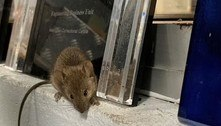 Ratos invadem cadeia, roem fios e internos serão transferidos