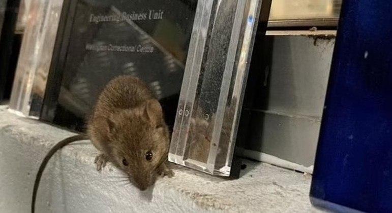 Ratos destruíram a fiação e painéis de segurança da instituição