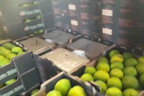 PF apreendeu droga em caixas de limão fresco