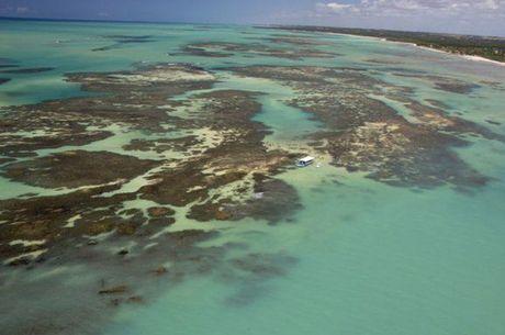 Recifes de corais podem deixar de existir