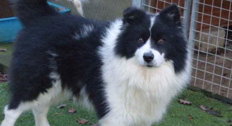 Abrigos temem que centenas de donos devolvam seus cães no Reino Unido