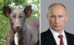 Olhos parecidos? O cachorro parece até filho de Vladimir Putin, atual presidente da Rússia