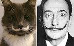 Este gatinho também nasceu com um marca de bigode
