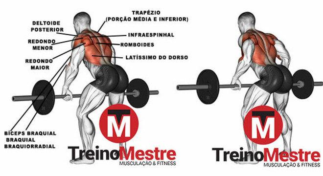 remada curvada músculos trabalhados