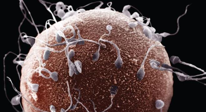 Reprodução sexuada, o que é? Definição, classificação e como funciona