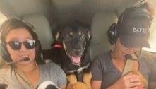 EUA: resgate de 27 cães que seriam sacrificados viraliza na internet