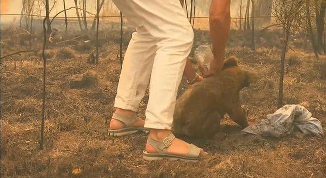 Mulher resgata coala em meio às chamas de incêndio na Austrália