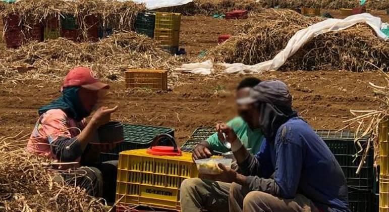 114 trabalhadores em situação análoga à escravidão são resgatados em Minas Gerais
