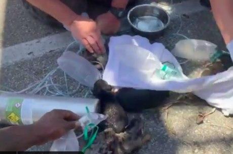 Animais foram resgatados de casa em chamas