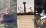 Vídeo aterrorizante mostra porque é melhor ficar longe de um alce.Mulher usa gaivotas para se vingar de vizinhos barulhentos.Imagem assustadora: tarântula gigante é vista comendo um gambá.A seguir, os conteúdos mais lidos doHORA 7na última semana!