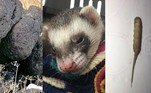 Foto magnífica mostra predador felino perfeitamente camuflado.Furão sobrevive após sofrer 100 minutos em ciclo de lavadora.Homem fica arrepiado ao ver criatura 'meio verme, meio rato'. A seguir, os conteúdos mais lidos doHORA 7na última semana!