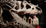 Visitors look at the skeleton of an Allosaurus living in Wyoming more than 150 million years ago displayed at Drouot auction house in Paris, France, October 13, 2020. REUTERS/Charles Platiau