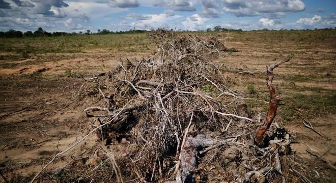 Cerrado foi a contrapartida para desacelerar a destruição da Amazônia