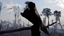 Alertas de desmatamento na Amazônia saltam 64% em maio
