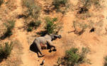 A dead elephant is seen in this undated handout image in Okavango Delta, Botswana May-June, 2020. PHOTOGRAPHS OBTAINED BY REUTERS/Handout via REUTERS ATTENTION EDITORS - THIS IMAGE HAS BEEN SUPPLIED BY A THIRD PARTY.