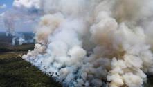 Calor causado por desmatamentos pode ser intolerável à vida humana