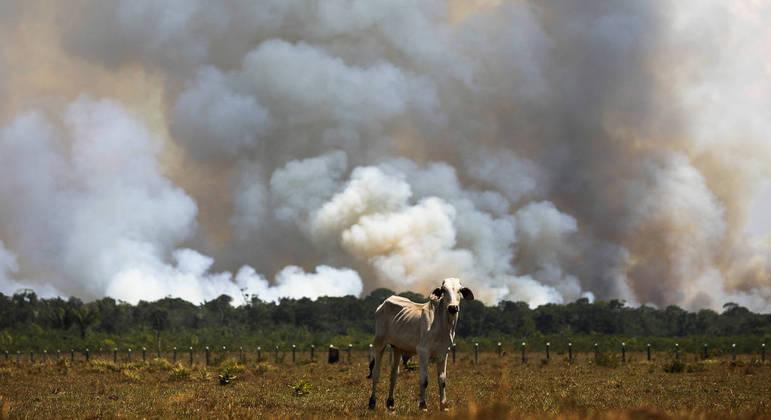 Floresta amazônica tem sofrido com avanço do desmatamento