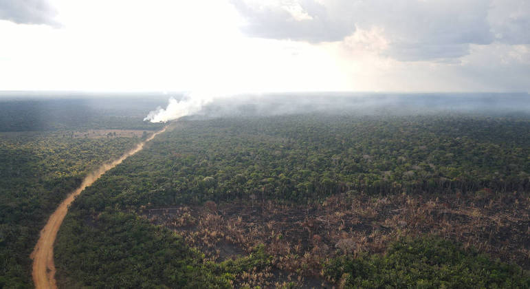 Concurso valoriza ações de estudantes pela preservação de florestas tropicais