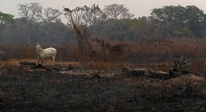 Salles vai sobrevoar áreas atingidas por incêndios no Mato Grosso