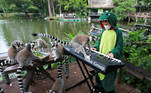 Lemurs are seen as Seenlada Supat, 11, plays keyboard for animals amid the coronavirus disease (COVID-19) outbreak, at a zoo in Chonburi, Thailand May 26, 2021. REUTERS/Soe Zeya Tun TPX IMAGES OF THE DAY