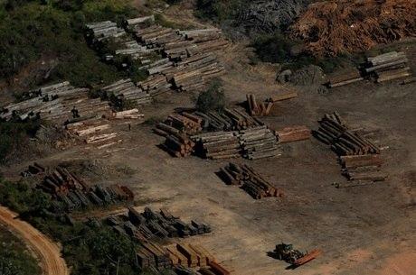 PF faz ação contra extração ilegal de madeira