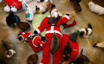 An employee dressed in a Santa Claus costume plays with cats at the Catgarden in Seoul, South Korea, December 14, 2020. Picture taken December 14, 2020. REUTERS/Kim Hong-Ji TPX IMAGES OF THE DAY