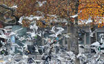 A woman feeds birds on a public square in Zurich, Switzerland November 11, 2020. REUTERS/Arnd Wiegmann