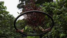 IBGE reduz estimativa de safra de café do Brasil 2021