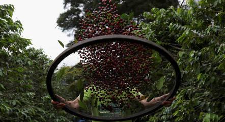 Safra de café deve ser 20% menor do que a de 2020