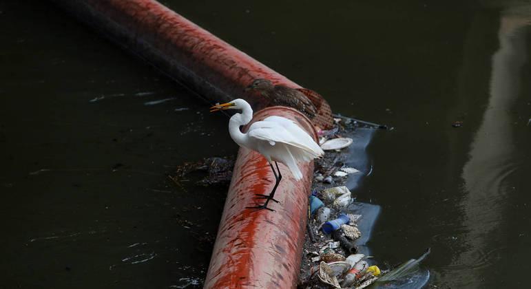 Garça pega peixe perto de lixo doméstico rio Pinheiros