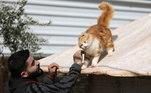 Além dos cuidados básicos de saúde e alimentação, os felinos ganham também muito carinho
