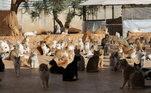 A maioria dos gatos abrigados no santuário chegaram feridos, pois foram deixados para trás por suas famílias que fugiam dos horrores da guerra