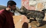 Os cuidadores conseguem manter os felinos e dar toda a assistência a eles graças ao apoio das forças de resistência sírias