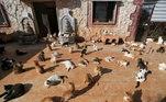 O Ernesto Santuário, em Idlib, na Síria, abriga mais de mil gatos resgatados da guerra no país