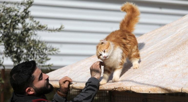 Cuidadores tomam conta de mais de mil gatos no santuário reaberto na Síria