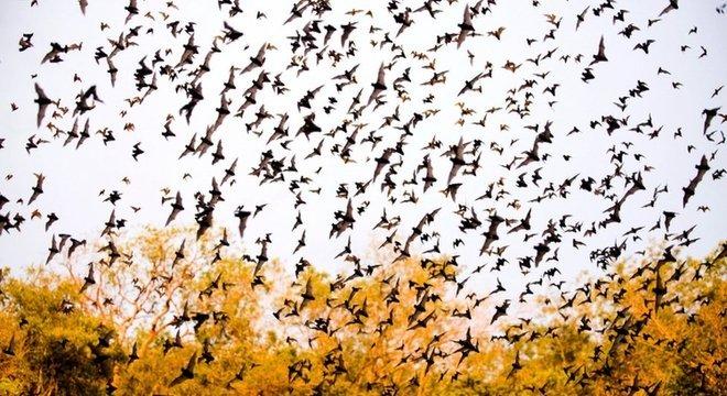 Morcegos saem de uma caverna de calcário no México