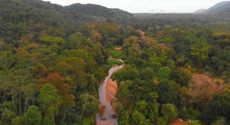 Ganho de floresta natural da Mata Atlântica é superior ao desmatamento desde 2005